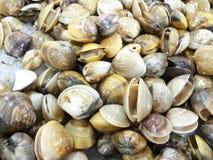 Venus shell at fresh-food market Royalty Free Stock Photos