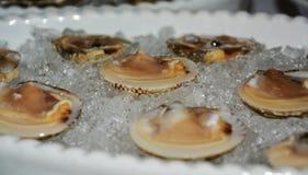 Venus shells Stock Photos