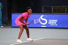 Venus Williams (de V.S.), tennisspeler Stock Afbeelding