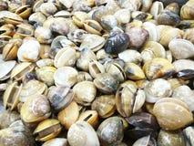 Venusshell bij vers-voedselmarkt Stock Afbeelding