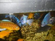 Venustus fêmea com bebês Foto de Stock Royalty Free