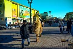 Venuta del cammello di Irkutsk nel centro urbano fotografia stock libera da diritti