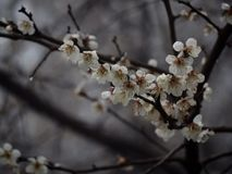 Venuta della primavera Fotografia Stock Libera da Diritti