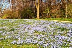 Venuta della primavera Fotografia Stock