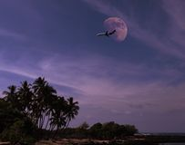 Aereo sopra l'isola tropicale Immagini Stock