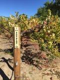 Venyard de California del país vinícola Imagenes de archivo