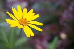 verão amarelo do verde da flora do jardim de flores da natureza fotos de stock