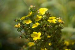 verão amarelo do verde da flora do jardim de flores da natureza imagem de stock royalty free