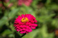verão amarelo do verde da flora do jardim de flores da natureza imagens de stock royalty free