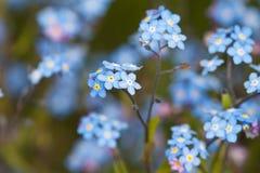 Verão azul Fotografia de Stock Royalty Free