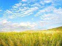 Verão, campo solar Imagens de Stock Royalty Free