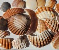 verão: Coleção de restos do shell foto de stock