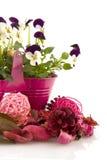 Verão cor-de-rosa Fotos de Stock Royalty Free