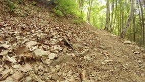 verão da salamandra nas florestas da montanha dos Carpathians video estoque