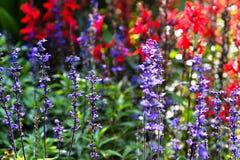 verão do jardim Fotografia de Stock