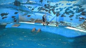 verão do jardim zoológico de Barcelona video estoque