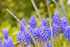 verão do orvalho da natureza da flor Foto de Stock Royalty Free