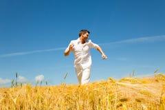 Verão dourado imagens de stock royalty free