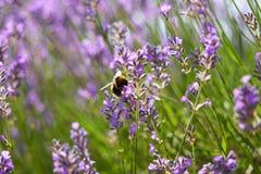 verão em Provence Foto de Stock