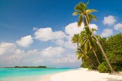 Verão em uma praia tropical Imagens de Stock Royalty Free