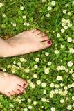 verão - feett na grama com camomila Fotos de Stock