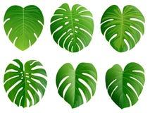 verão, folhas da mola ajustadas Ícone liso verde Vetor, isolado sobre Foto de Stock Royalty Free