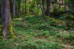 verão Forrest Foto de Stock Royalty Free