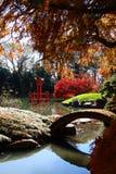 Verão indiano de jardins botânicos de Brooklyn Fotografia de Stock