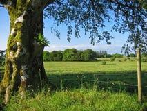 Verão irlandês foto de stock royalty free