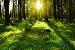 verão na floresta Foto de Stock Royalty Free
