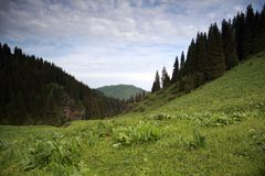 verão nas montanhas imagens de stock