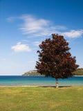 Verão no lago Huron Fotos de Stock