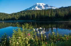 verão no Mt Mais chuvoso, lago reflection Fotografia de Stock Royalty Free