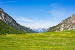 Verão nos alpes O prado alpino de florescência e a floresta verde luxúria ajustaram-se entre a cordilheira da alta altitude Foto de Stock