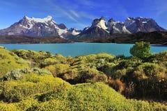 Verão Patagonian Imagens de Stock