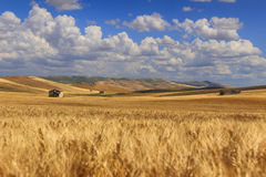 VERÃO RURAL DA PAISAGEM Entre Apulia e Basilicata: campo com o campo de milho protegido por nuvens Italy imagem de stock