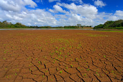 verão seco com céu azul e as nuvens brancas Lago dryness no verão quente Negro de Cano, Costa Rica Lago mud com pouco fluxo verde foto de stock