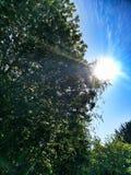 Verão Sun imagens de stock royalty free