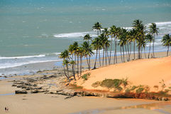 Verão tropical Imagem de Stock