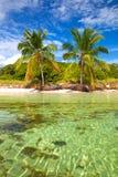 verão tropical com palmeiras Imagens de Stock