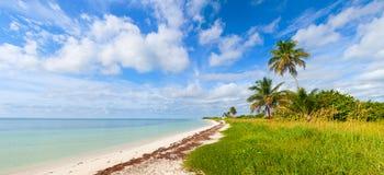 verão tropical com palmeiras Fotos de Stock Royalty Free