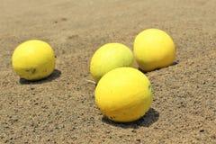 verão vagetable em desertos indianos fotos de stock royalty free