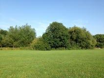 verão verde do parque Imagem de Stock