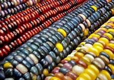 Indischer Mais Lizenzfreie Stockbilder