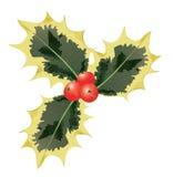 Veränderte Stechpalme-Blätter und rote Beeren. Vektor. Stockfotografie