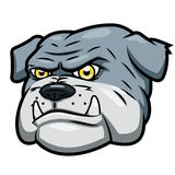 Verärgerte Bulldogge Lizenzfreie Stockfotos