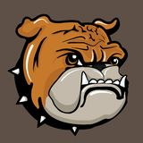 Verärgerte Bulldogge Stockbild