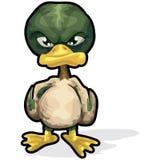 Verärgerte Ente mit Ausschnittspfad Lizenzfreie Stockbilder