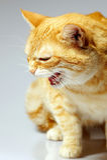 Verärgerte Katze. Lizenzfreies Stockfoto