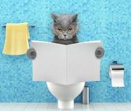 Verärgerte Katze, die auf einem Toilettensitz mit Verdauungsproblem- oder -verstopfungslesezeitschrift oder -zeitung sitzt lizenzfreies stockbild